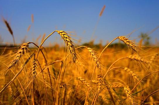 Россия сумела на 40% нарастить экспорт зерна