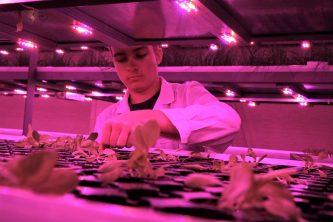 Тепличное производство овощей на Чукотке увеличено на 14%