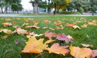Москвичи решают, что делать с опавшей листвой