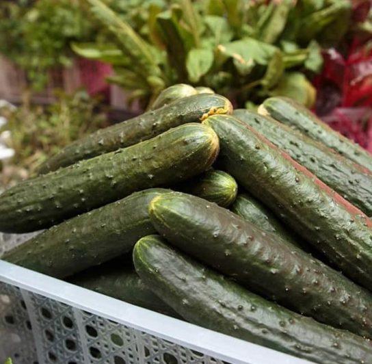 Чукотская овощная фабрика «Росинка» бьёт рекорды по сбору урожая