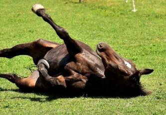ПАСЕ напомнила Украине: загнанных лошадей пристреливают