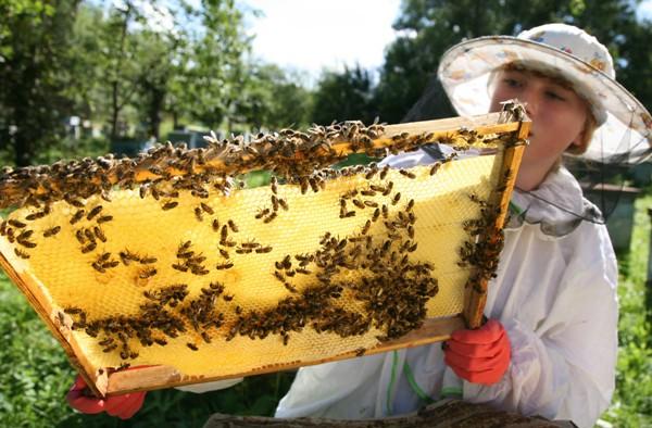 Качественная вощина для пчеловодов