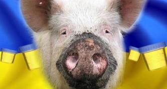 ДНР: Украинские свиньи больны африканской чумой