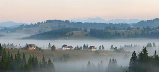 Европа требует от Киева отдать ей весь украинский лес-кругляк