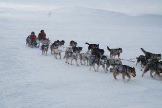 Традиционная чукотская гонка на собачьих упряжках «Надежда-2018» готовится к старту