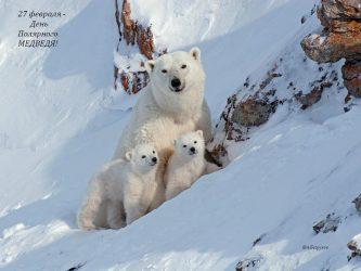 Арктическим странам представлена стратегия по сохранению белого медведя на Чукотке