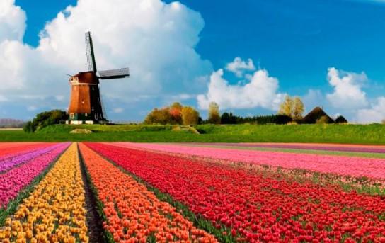 Голландия отказалась от участия в американском ударе по Сирии