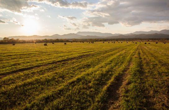 Успешные фермеры из села Марково планируют взять уже второй «Дальневосточный гектар» для расширения хозяйства