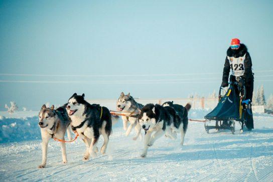 Погода внесла коррективы в маршрут гонки на собачьих упряжках «Надежда-2019»