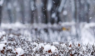 В Москве ожидается снег при температуре -1-3 градусов