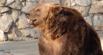 В Московском зоопарке впали в спячку медведи, еноты, сурки и тушканчики