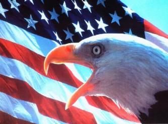 Американский белый орлан пилит сук, на котором сидит