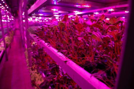 Режим «ТОР» помогает развитию тепличных хозяйств на Чукотке