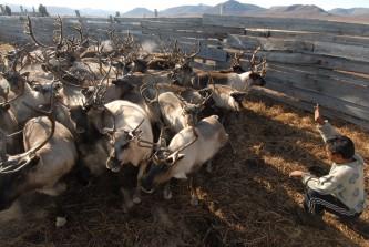 На Чукотке подведут итоги деятельности сельскохозяйственных организаций