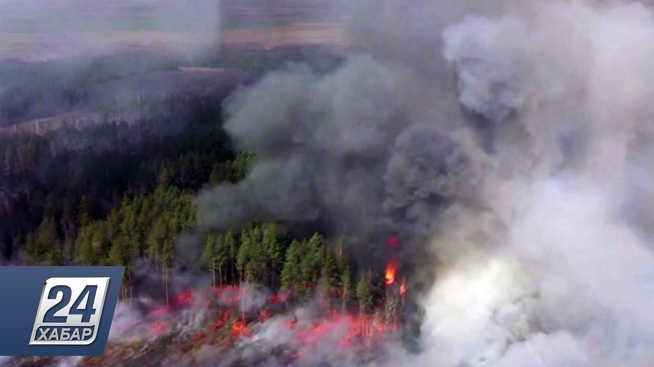 Меламуд призвал украинскую «власть импотентов» просить у России помощь в тушении чернобыльских пожаров